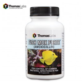 Buy fish mox forte amoxicillin 500 mg 30 count for Where to buy fish mox