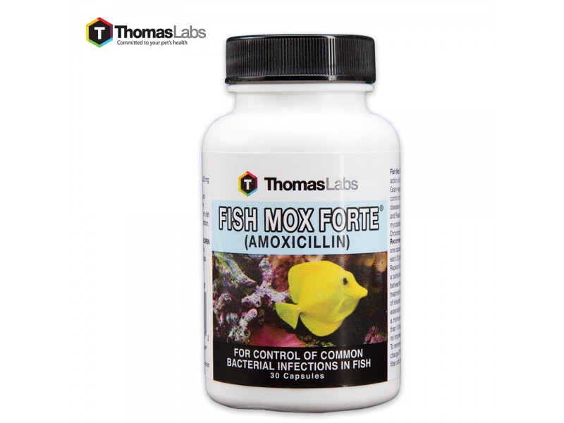 Buy fish mox forte amoxicillin 500 mg 30 count for Where can i buy fish mox